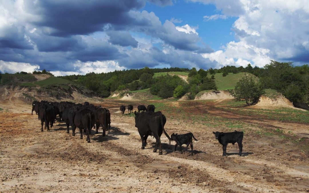 Relief Available to Farmers and Ranchers Impacted by the COVID-19 Pandemic
